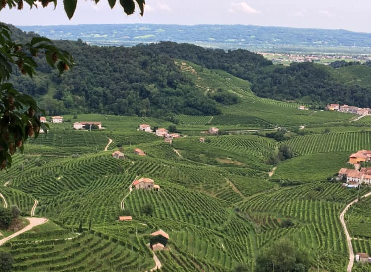 Immagine #Prosecco#hills #Conegliano#Valdobbiadene#Unesco#Worlheritage. A big day for #Italy