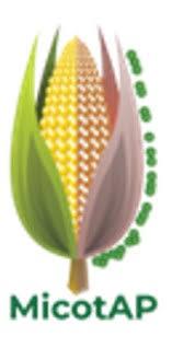 """Immagine Webinar """"L'Innovazione nel controllo delle micotossine del Mais"""""""